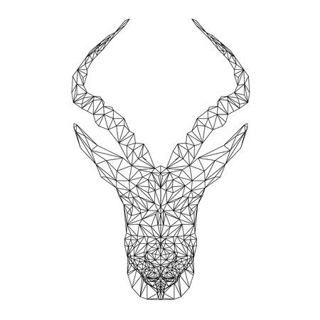 springbok: Springbok african animal