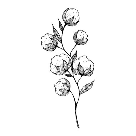 hand-drawn blooming cotton flowers. Sketch Drawn in black pen. Isolated on a white background. Trace to vector. Black and white design. Monochrome vintage vector illustration Çizim