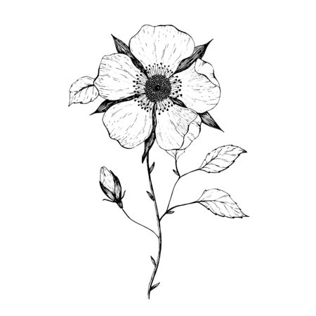 beautiful monochrome black and white dahlia flower isolated on white background. Hand-drawn contour lines and strokes. Çizim