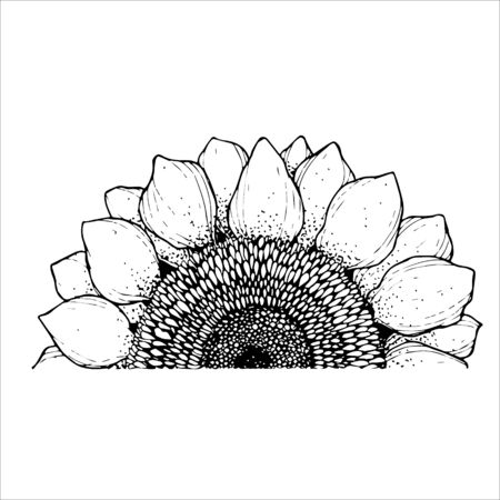 beautiful black and white sunflower isolated on white background. Hand-drawn contour lines. Monochrome vector illustration. Only half of flower