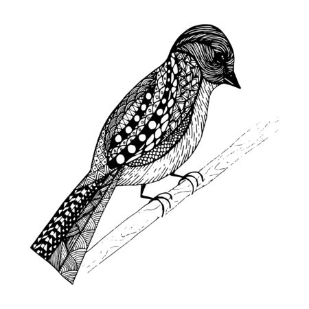 Abstract bird sits on a branch. Drawn by hand in a black hand draw style liner. Isolated on a white background. Bird with a pattern on the wings and tail.