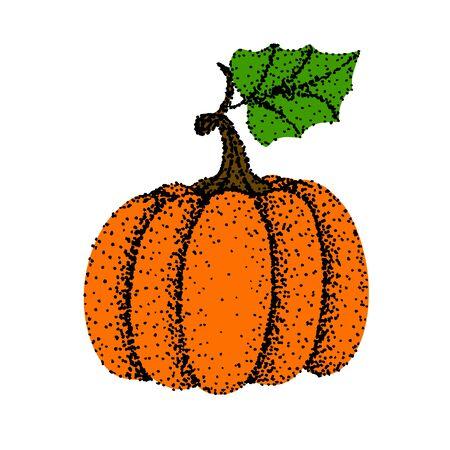 Drawing of pumpkin - hand sketch with black pen,Colorful illustrtation Çizim