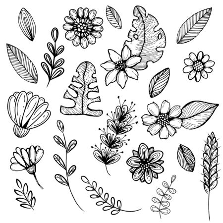 Set of floral elements for seasonal design. Various tsyets and leaves are isolated on a white background. black and white illustration, objects are hand-drawn Illustration