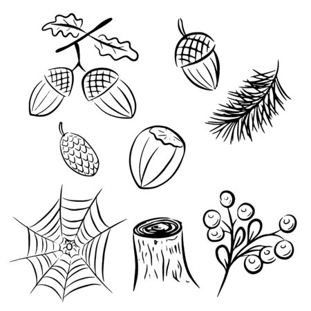 A set of elements on the theme of the forest. Acorns, cobwebs, nuts, hazelnuts, fir cones, cobwebs, stumps, berries, spruce branch. Drawn by hand. Black and white items for autumn decor. 8 objects isolated on white background.