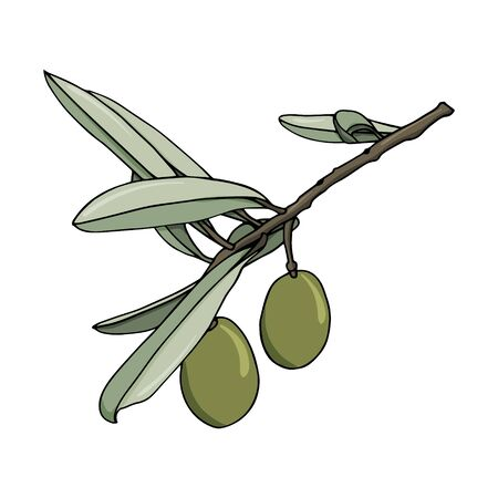 elements with olive branches with leaves and berries. Green olives are drawn by hand. object isolated on a white background. black stroke elements. Olive tree for background texture frame or border.