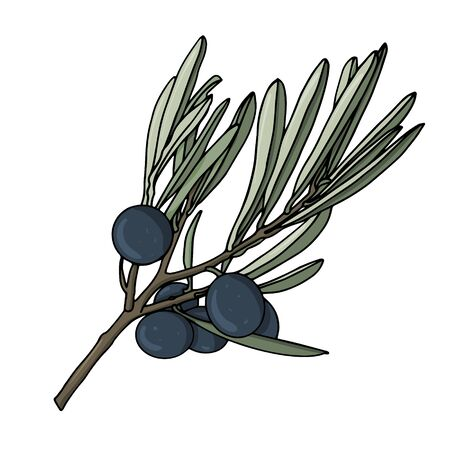 elements with olive branches, with leaves and berries. Black olives are drawn by hand. object isolated on a white background. black stroke elements. Olive tree for background, texture, frame or border.