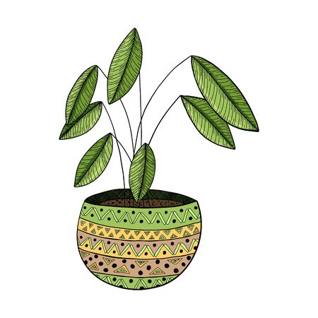 Potted houseplant with geometric pattern in doodle style. Ficus with green leaves. Color vector illustration drawn by hand. The object is isolated on a white background. Design element on the theme of home decor and a cozy home. Illustration