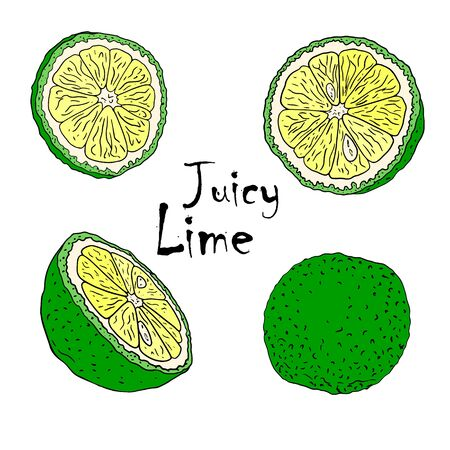 Vector color illustration with lymes . Slice, half, whole lime. Set of hand-drawn Doodle-style Elements for packaging design of tea, juice, health products and cosmetics. Isolated on white background. Ilustração