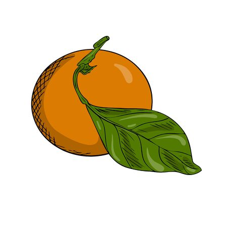 Tangerine or orange on a branch with leaves. Doodle style. The citrus sketch is hand drawn and isolated on a white background. Outline drawing with hatching and texture. Color vector illustration. Stock Illustratie