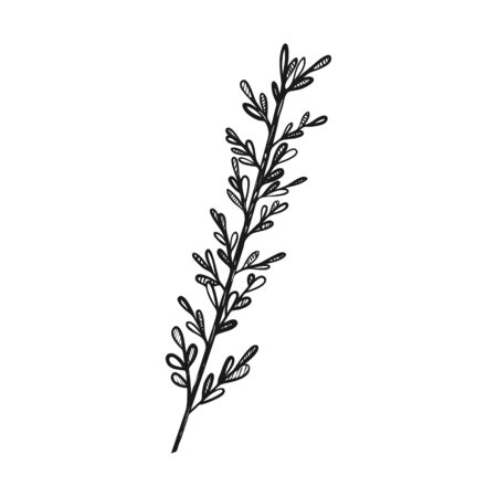 A sprig of thyme. Herbs for cooking, cooking. Doodle style. Drawn by hand and isolated on a white background. For menu design, recipes, and food packaging. Black and white vector illustration Ilustracja