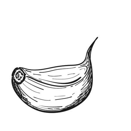 Garlic clove in Doodle style. The vegetable is drawn by hand and isolated on a white background. black and white vector illustration. For menu design, recipes, food packaging.