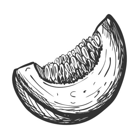 Sketch of pumpkin slices.Doodle style. Drawing of a piece of ripe pumpkin with seeds with hatching and texture. Hand drawn and isolated on white. Can be used for thanksgiving, recipes, menus