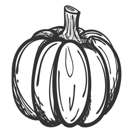 Sketch of a whole pumpkin in Doodle style. Drawing of a ripe pumpkin with hatching. Hand drawn and isolated on a white background. Can be used for thanksgiving, recipes, menus, and harvest festivals