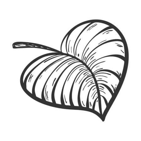 Abstract leaf of a plant with veins and texture in Doodle style. Botanical illustration hand drawn and isolated on a white background. Black-white vector