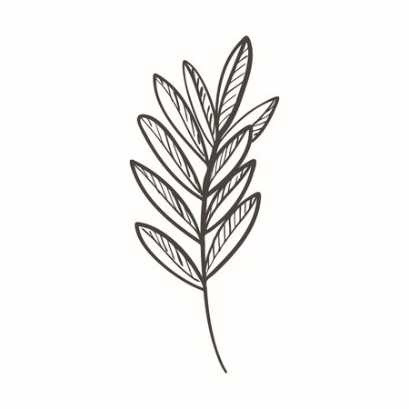 Abstract twig of a plant with leaves and texture in Doodle style. You can use it to design menus and recipes. Botanical illustration hand drawn and isolated on a white background. Black-white vector Ilustracja
