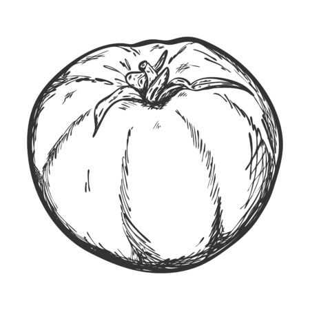 A sketch of a tomato drawn by hand and isolated on a white background. Design element for decorating menus, recipes, cooking magazines, and food packaging. Black and white vector illustration. Doodle
