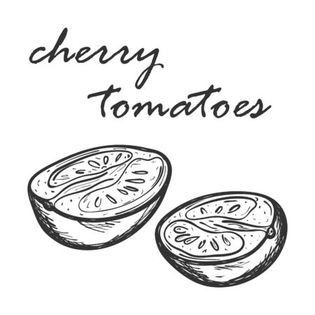 Sketch of cherry tomatoes cut in half. Hand drawn and isolated on white. Decorative element for menu design, recipes, cooking magazines, food packaging. Black and white vector illustration. Doodle Ilustracja