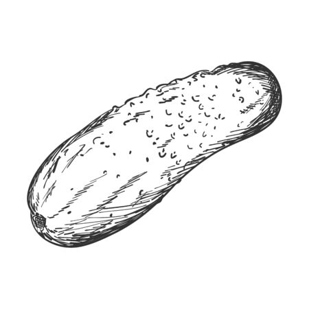Sketch of a fresh cucumber. Side view. Cucumber, gherkin.Black-and-white vector illustration for recipes, menus, and packaging. Hand drawn, isolated on a white background.