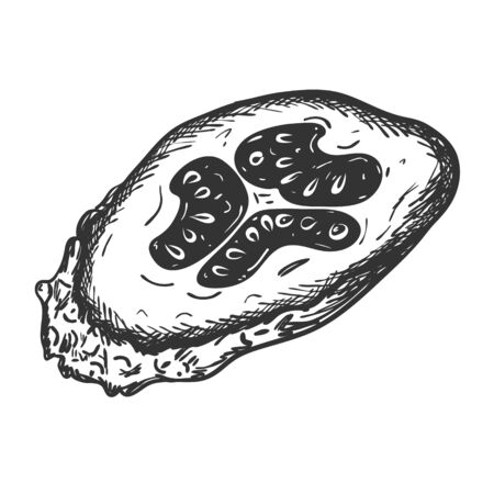 A cross-section sketch of a cucumber. Hand drawn and isolated on white. Design element for decorating menus, recipes, cooking magazines, and food packaging. Black and white vector illustration. Doodle