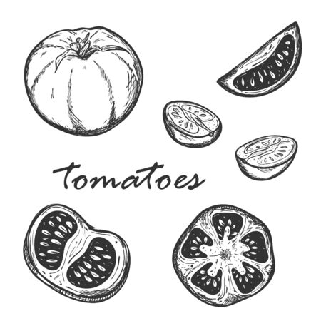 Sketch of tomatoes in different types. Set with whole, cut lengthwise and across tomatoes. Segments of cherry tomatoes. Drawn by hand and isolated on white.For menu design, recipes. Black-white vector