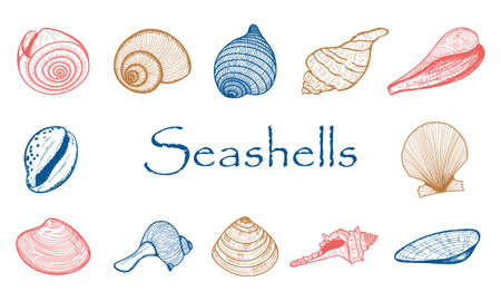 A set of empty seashells. The sketch shells of molluscs, shellfish, mussels, Nautilus.The engraved drawing is hand drawn. Doodle style. Color collection of illustrations.isolated on a white background