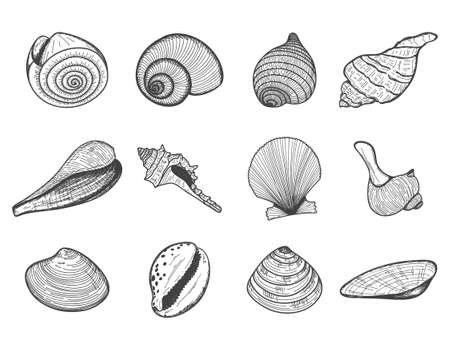 A set of empty seashells. The sketch shells of molluscs, shellfish, mussels, Nautilus. The engraved drawing is hand drawn. Doodle style. Black and white illustration isolated on a white background