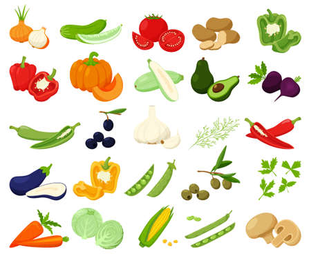 Large set of fresh vegetables, pumpkin, avocado, chili. Whole and half. collection of decorative cliparts for food design, recipes, menus, icons.Flat vector illustration, isolated on white background