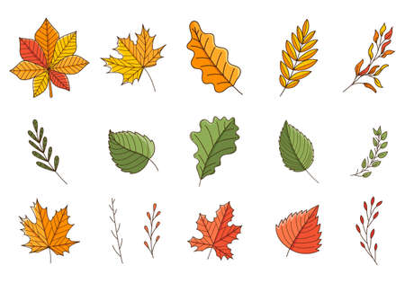 A set of colored doodles. Autumn, colorful leaves and twigs. Oak, maple, birch, chestnut. Botanical decorative elements with outline and fill. Color vector illustration isolated on a white background Vettoriali