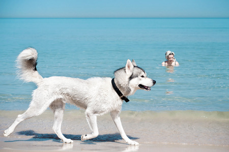 swimming shoes: Dog runing along the shoe of sea Stock Photo