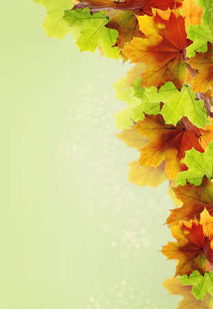 Fresh Green Background with colored autumn leaves photo