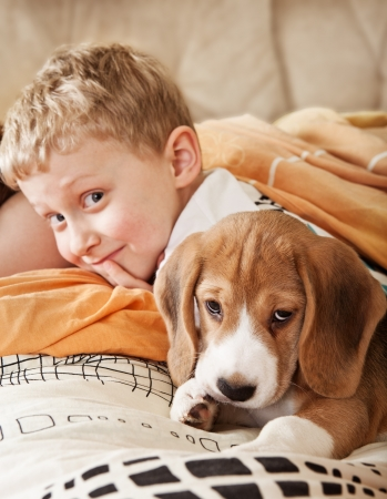 beagle puppy: Beagle puppy lying in bed with happy little boy