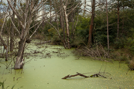 Swampy pond in the never ending Belarusian woods photo