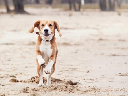 Glücklicher laufender Hund Porträt Standard-Bild - 24083529