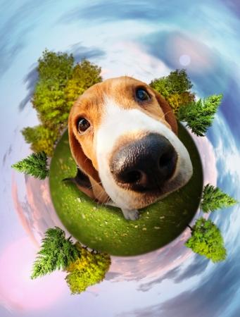 planeta tierra feliz: Cachorro beagle divertido retrato Foto de archivo