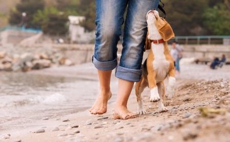 Puppy beagle loopt in de buurt van het eigenaar benen Close-up beeld