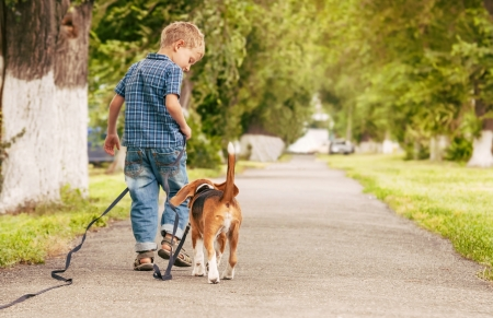 Little boy walking with his beagle puppy better friend