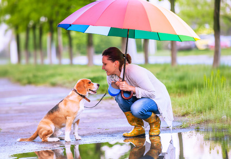 ander: Woman with his beagle dog sitting ander big bright umbrella