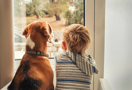 puppies: little boy with best friend looking through window  Stock Photo