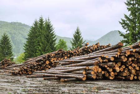 スロバキア、タトラ山のログ