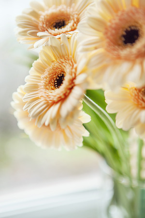 Gerberas bouquet close up image photo