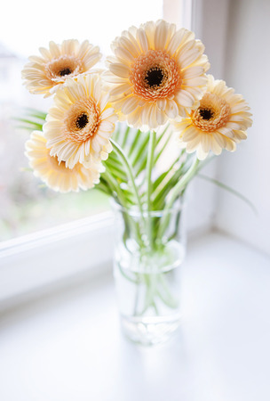 Gerberas bouquet on the windowsill with bright daylight photo