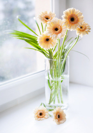 Gerberas bouquet on the windowsill with bright daylight photo