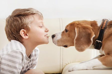 beagle: Little piece of cookies to my friend - boy give cookies part for beagle