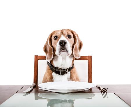提供のテーブルの上に夕食を待って犬