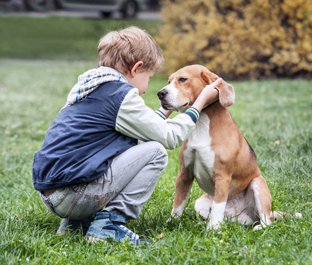 beagle puppy: Two best friends - boy and his dog