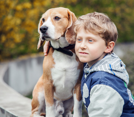 beagle puppy: Boy with beagle portrait Stock Photo