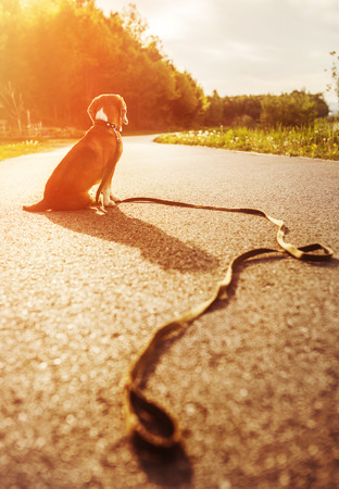 far away look: Lost dog sitting on the road alone