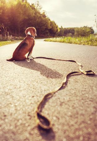 Verloren hond zittend op de weg alleen Stockfoto