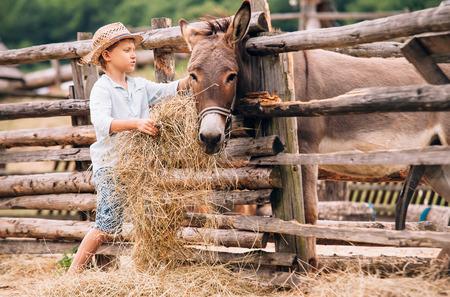 농장에서 건초와 당나귀 먹이를하는 소년