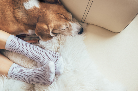 Beagle dog and woman relax together on comfortable sofa Foto de archivo